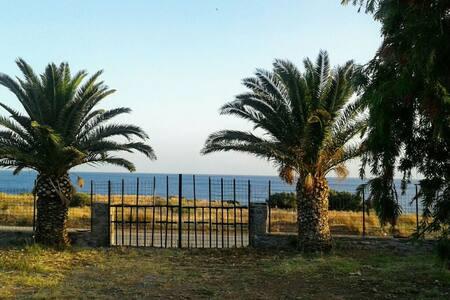 Antonis' palm house