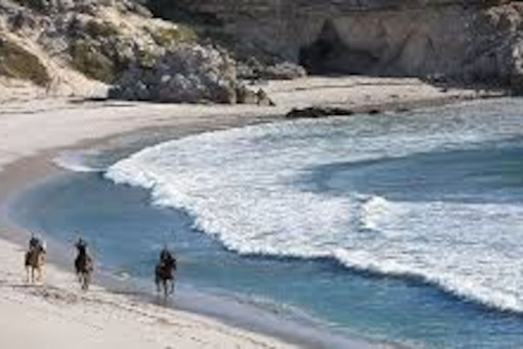 Horse Riding along Beach