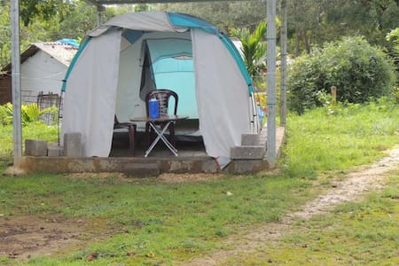 1BR Tent in Dandeli Jungle - Accommodation Only