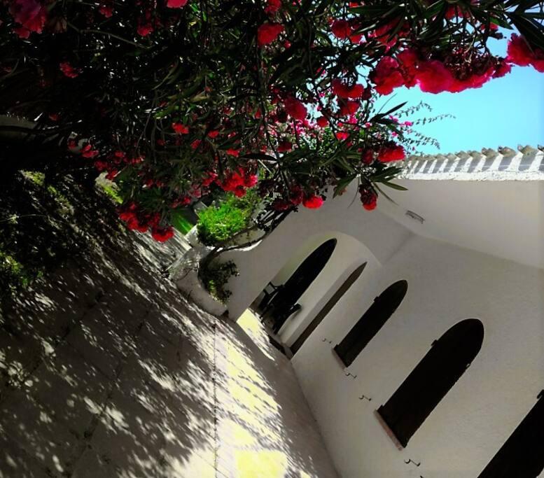 veranda fiori ibiscus