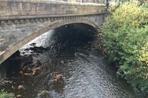 The Water of Leith provides habitat for a diverse range of wildlife.
