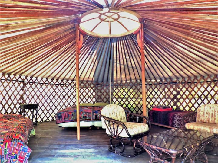 5 Experience the Misty Forest in a Mongolian Yurt