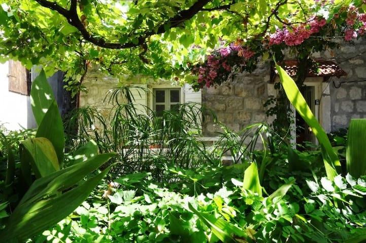 The Old Vine House Perast Montenegro - Perast - Rumah