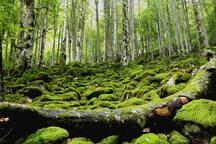 La réserve du Mont-Valier