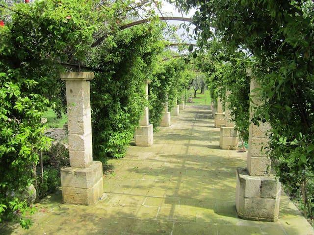 Harmonious Villa in the Olives Tree Nature...