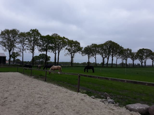 Urlaub mit dem eigenen Pferd und Hund in Aurich