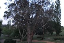 The garden at sunset.