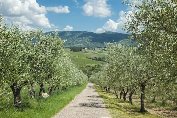 our private drive through our olive grove