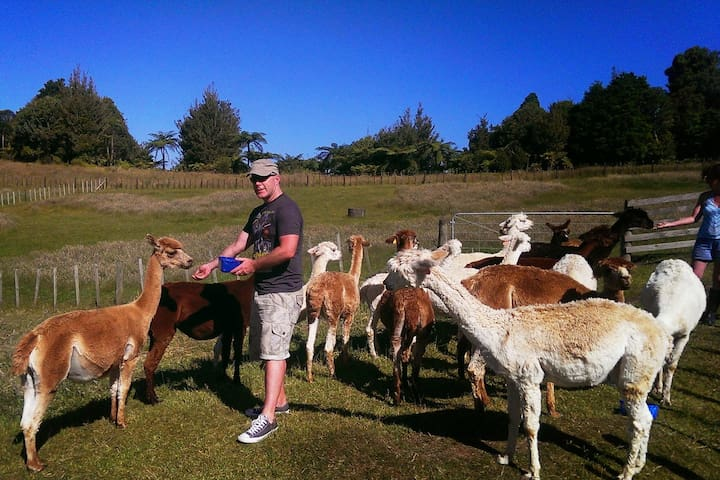 Hacienda Alpaca Stud: relax and enjoy rural NZ - Tauranga - House