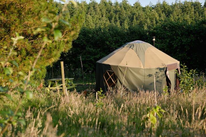 Little Yurt