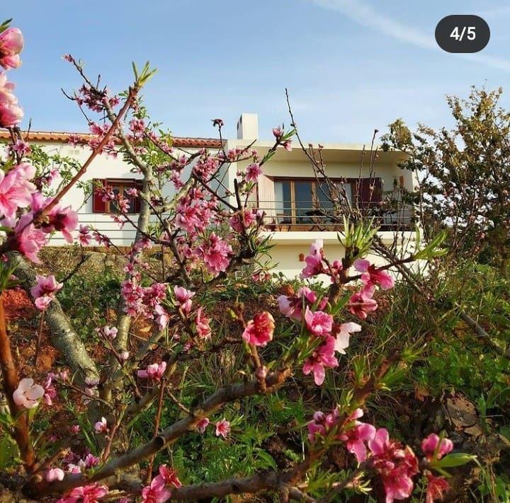 Quinta dos Malhadais,  Figueira- Farm house