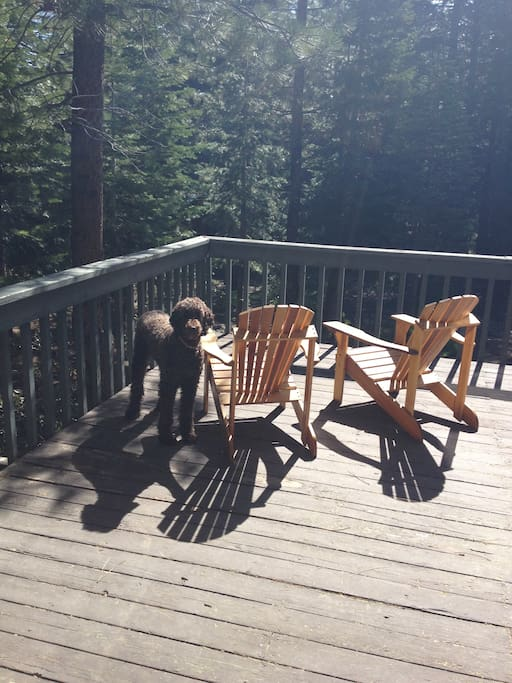 Adirondack chairs (dog not included)