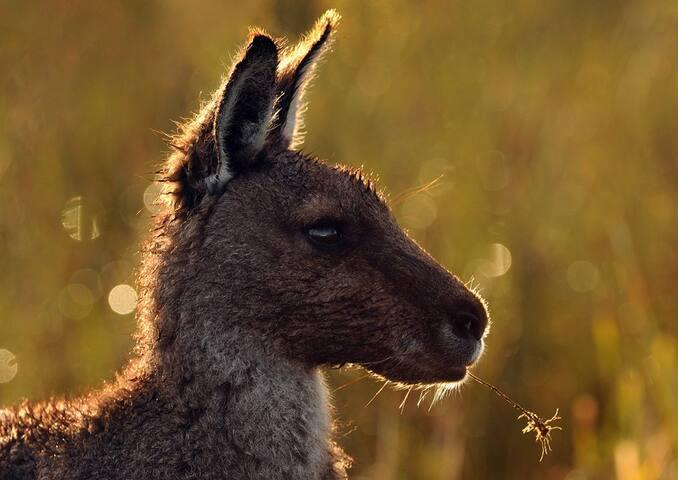 Abundance of Australian Wildlife