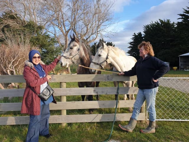 Taking time out to meet the horses Hangover, left, and Ormond.