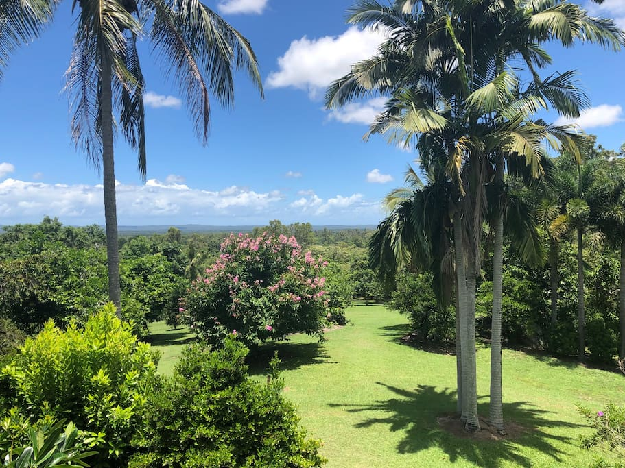 Beautiful views over Byfield and the tropical fruit orchard.