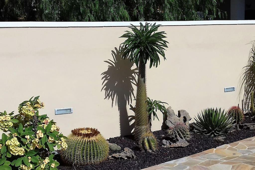rock garden con varie specie di piante grasse