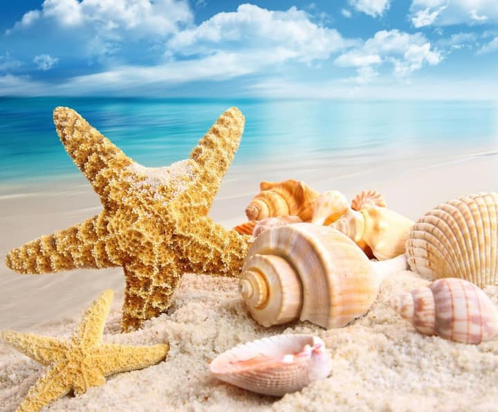 🏖 🐚 Seashell By The Beach 🐚 🏖