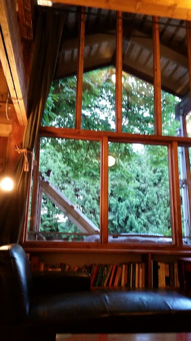 Tree Tops-Chestnut Tree (Partial view from inside main level ).
