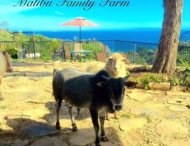 Malibu Mini farm glamping