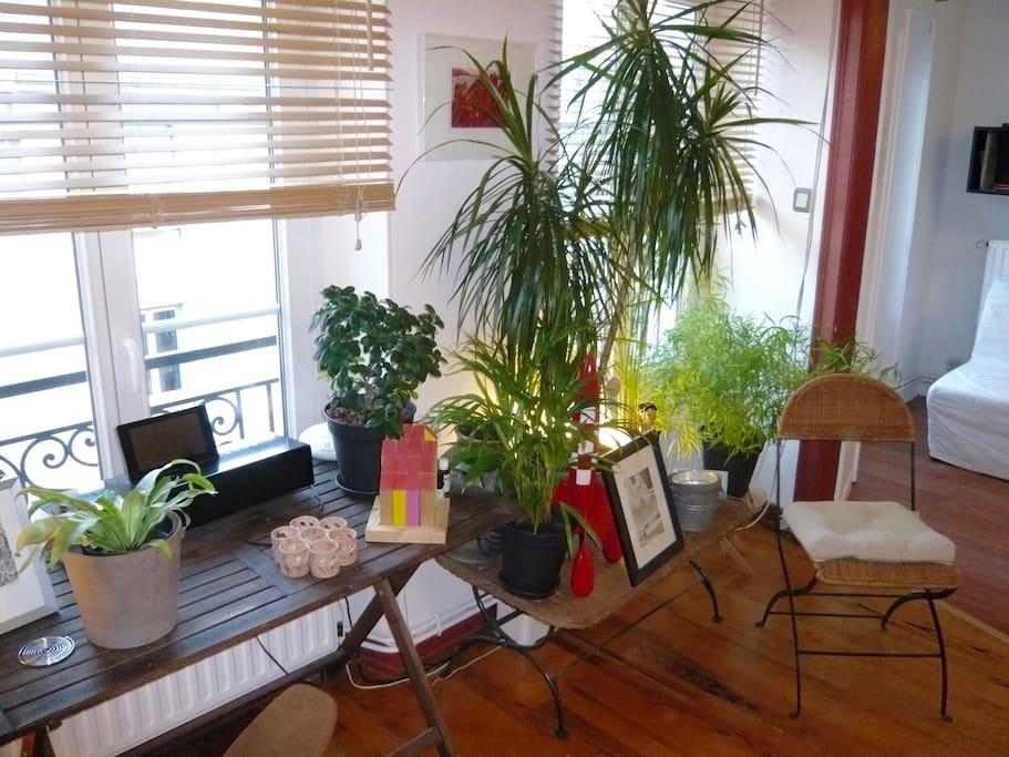 Les plantes se sentent bien ici!