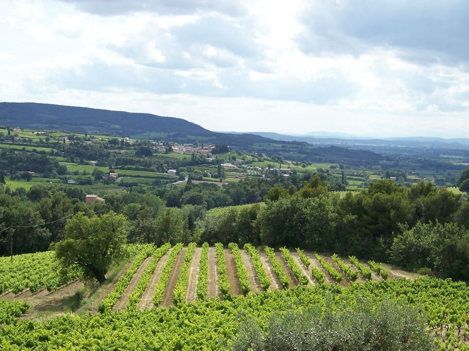 vue du domaine viticole