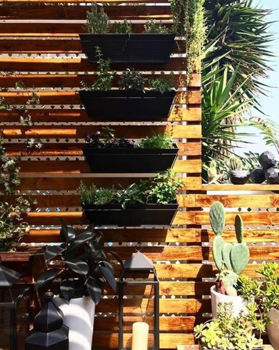 New outdoor herb garden!