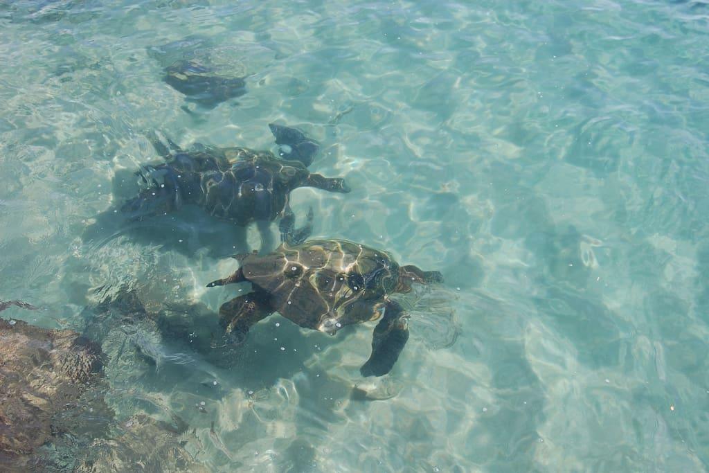 Sea turtles galore