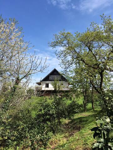 Большой дом - Kobuleti