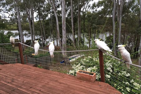 Riverside picnics near Gold Coast Theme Parks - Upper Coomera - Bed & Breakfast