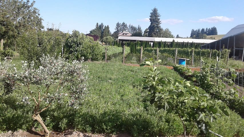 Organic vegetable gardens and orchard for you to pick - or just stroll in - at your pleasure.