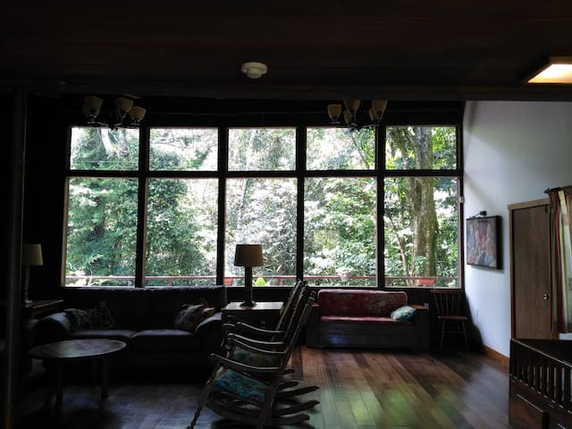 Windows on the forest