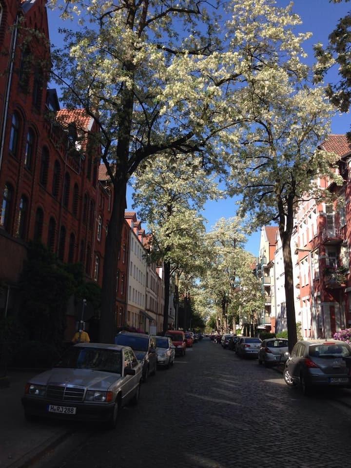 ruhige Seitenstraße mit Bäumen  in Hannover Döhren