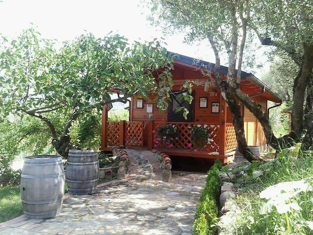 soluzione montagna - Vallo della Lucania - House