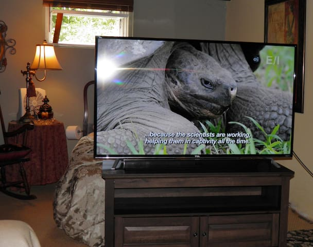 "A 55"" 4k Roku TV for your viewing pleasure."