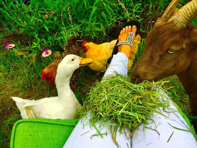 Sitting in the farm garden making friends.