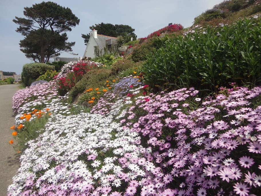 Le jardin au mois de mai ...