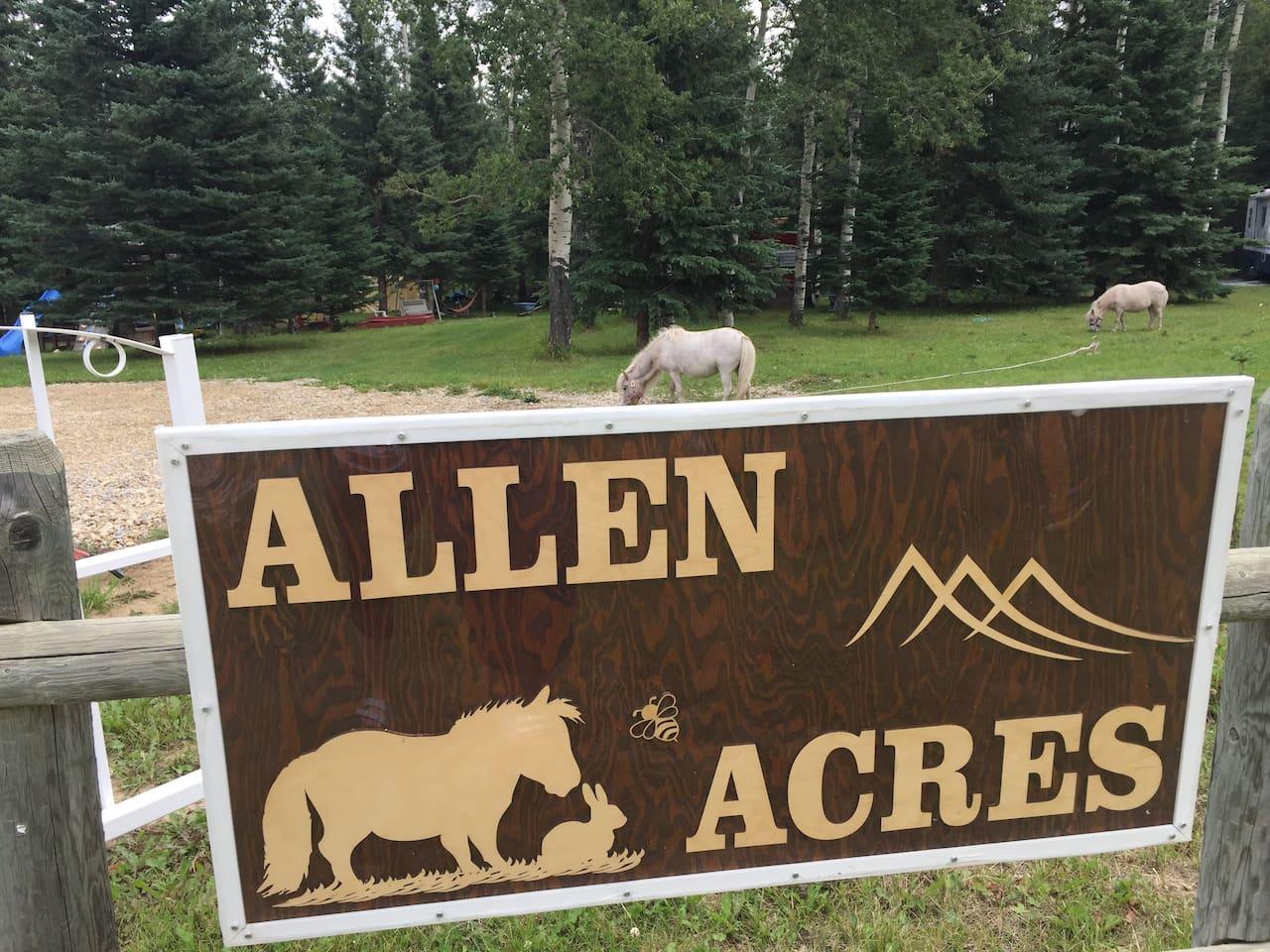 Welcome to Allen Acres!