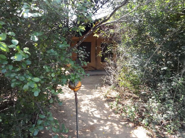 Eco Island Sri Lanka Tented Camp - Yala - เต็นท์