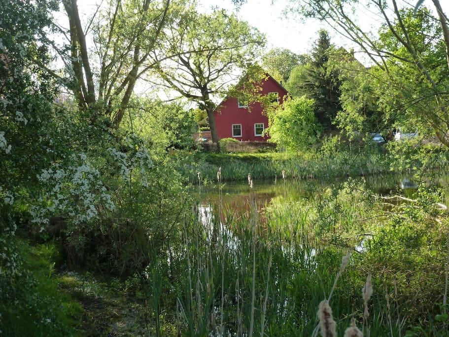 Blick von unserem Teich aus auf die Fenster der Ferienwohnung