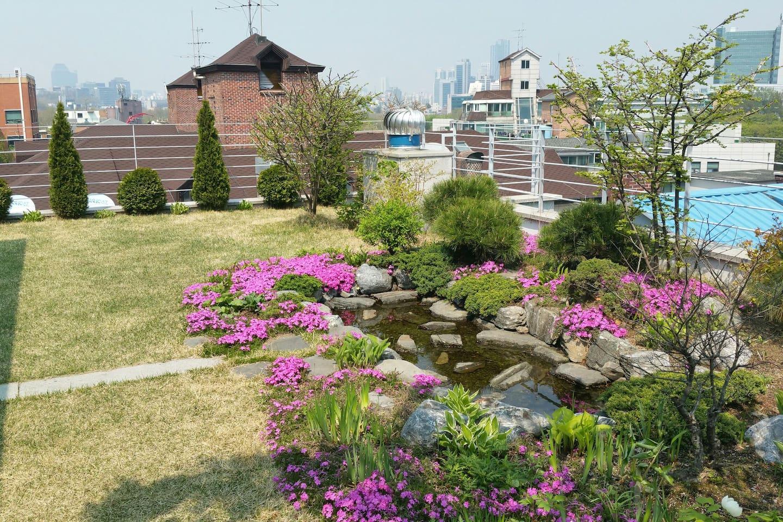 Rooftop garden (spring)