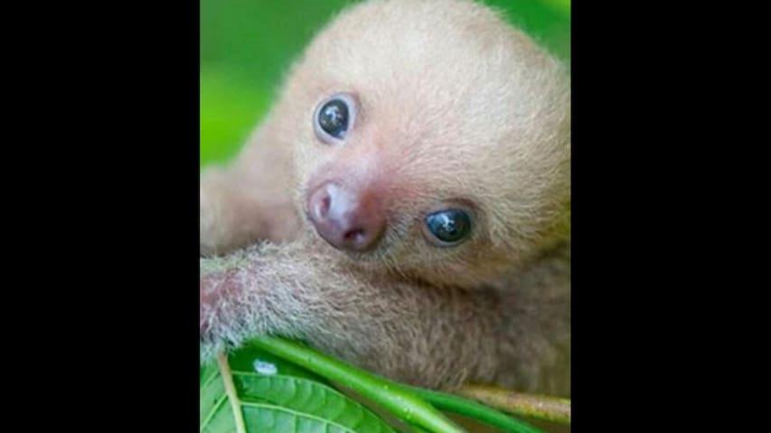Fake listing baby animal