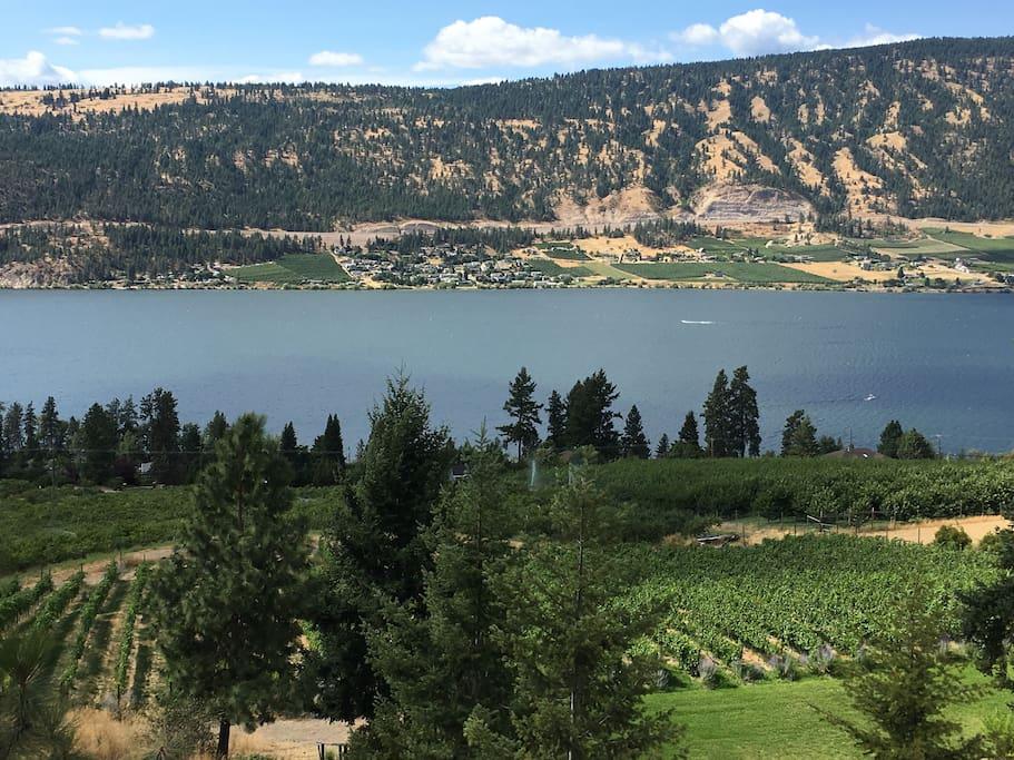 Vineyard and view!