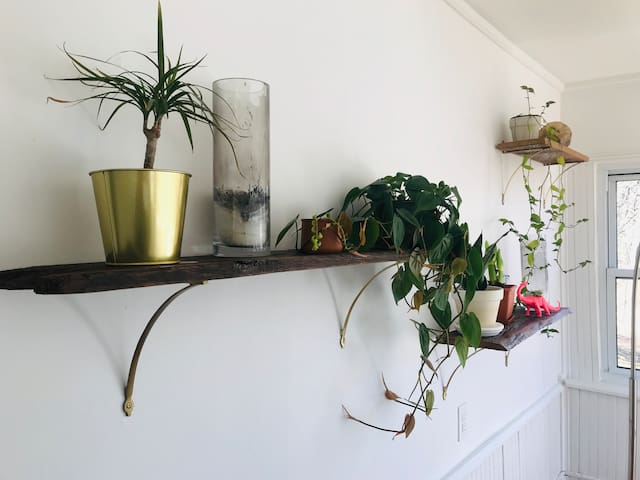 Plant wall in the dining room