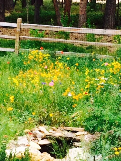 Wildflower meadow in front yard