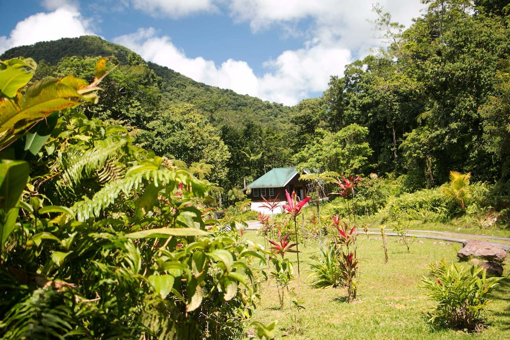 Nestled in the foothills of Morne Trois Pitons National Park, Jacko Cottage sits peacefully between mountains, river, forest, and beautifully landscaped gardens