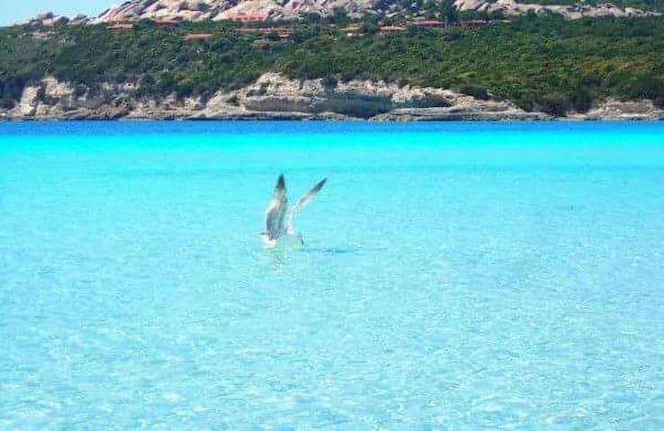 Splendido bilocale vicino al mare. - Santa Teresa Gallura