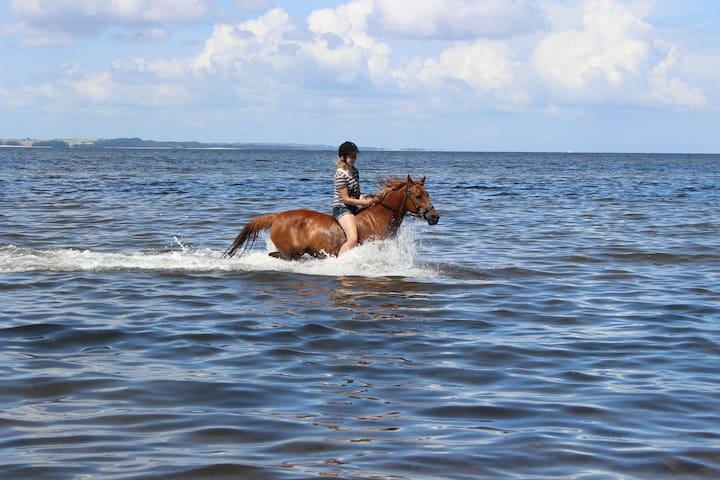 Tag din hest med på ferie, tæt på badestrand - Hvalpsund - Leilighet