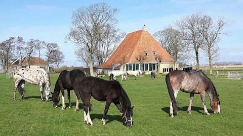 Farm guesthouse country site with horses / animals