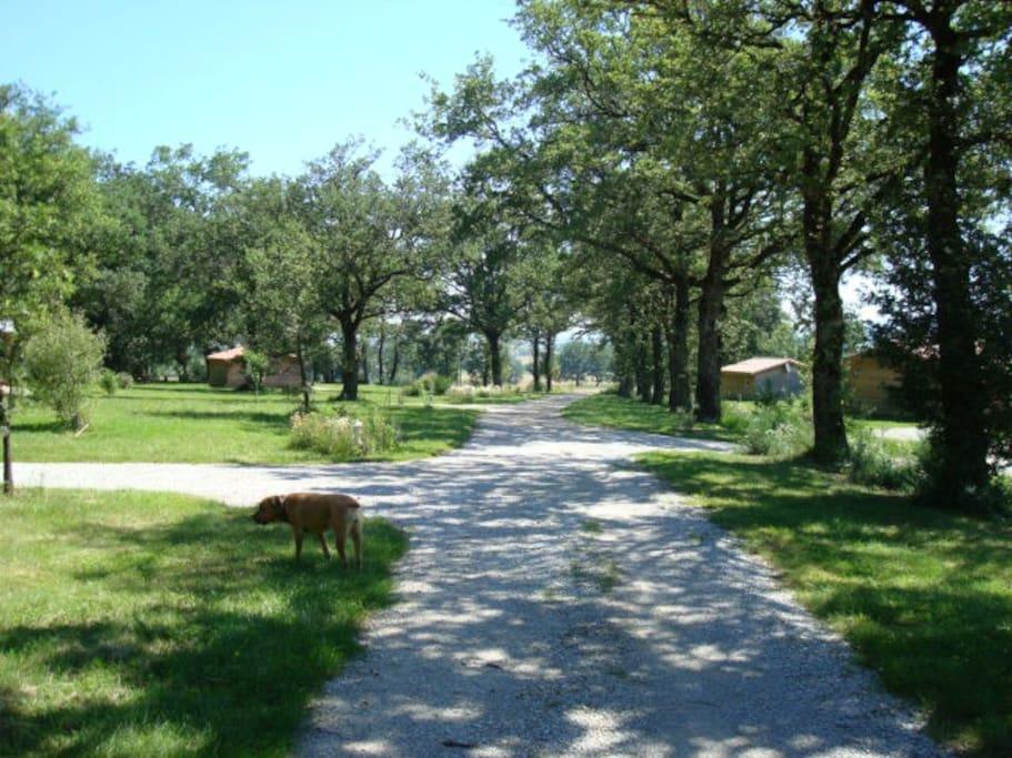 Chemin d'accès aux mobilhomes