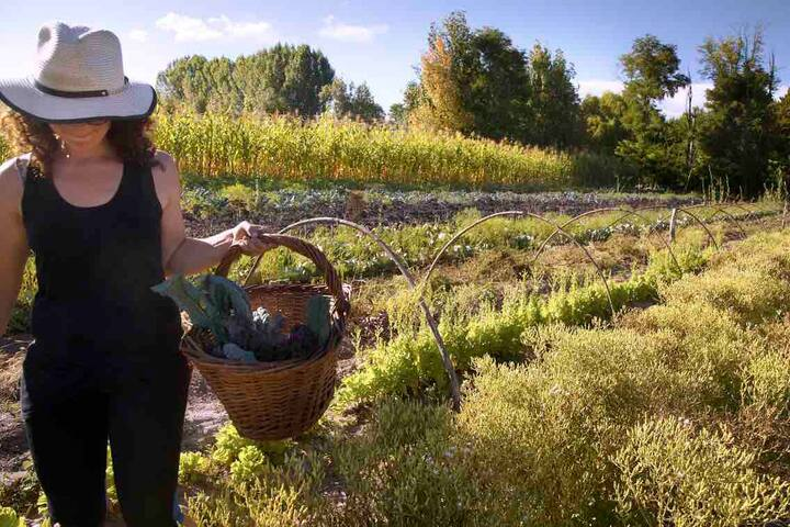 Organic farm near the wineries - Uco Valley